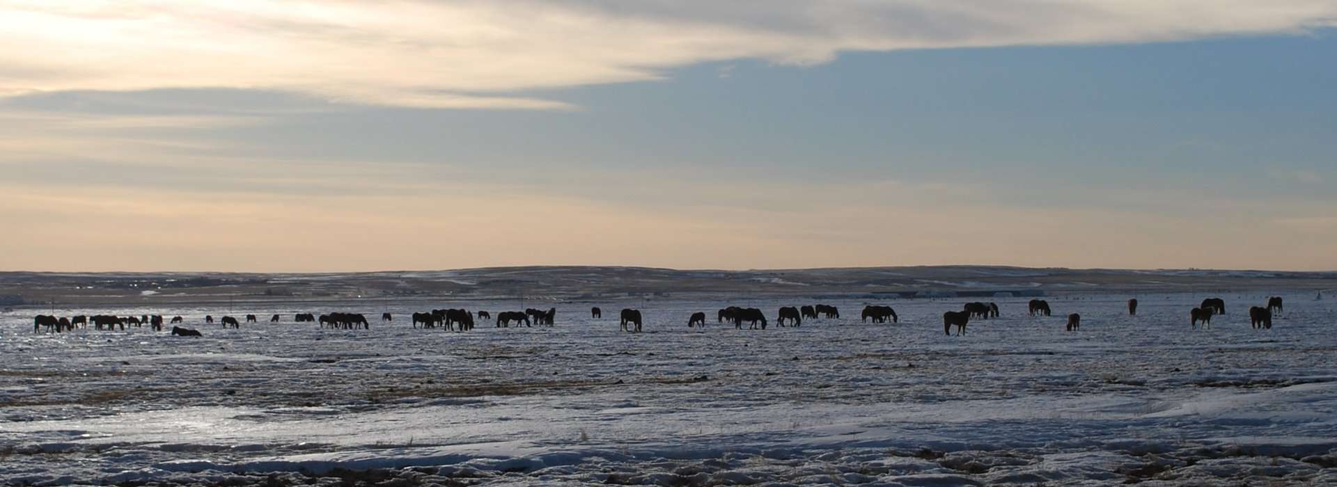 Lacey and the African Grandmothers - Horses at Siksika